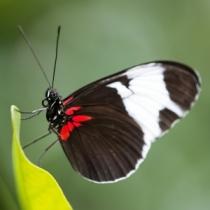 1417823_butterfly